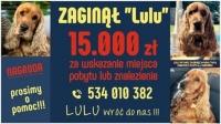 Zaginął LULU - nagroda 15 000 zł!!!