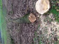 Wycinka drzew wywóz gałęzi.