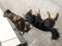 2 psy