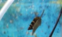 Helenka na plagę ślimaków