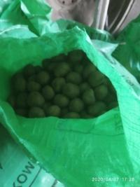 Ziemniaki sadzeniaki Satina, Bryza