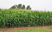 Przyjmę w dzierżawę grunty rolne