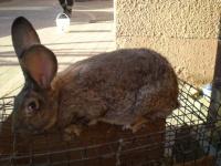 króliki ,tuszki
