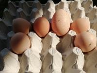 Świeże jaja z wolnego wybieu