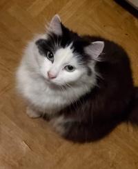 Zaginęła kotka 💔 💔, nadal szukamy 😓