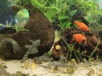 60 szt życia do akwarium