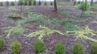 Usługi ogrodnicze , zakładanie ogrodow