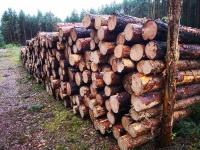 Sprzedam drewno opałowe sosnowe oraz inne rodzaje drewna.