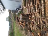 Sprzedam drewno sosnowe