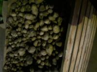 Sprzedam ziemniaki paszowe,odpadowe