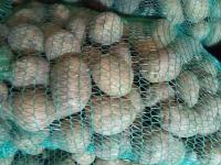Sprzedam ziemniaki worek 15 kg
