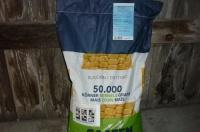 kukurydza sucorn