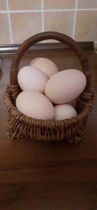 Sprzedam jajka jaja wiejskie