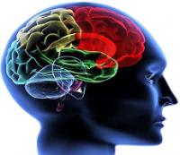 mózg w najlepszym wydaniu