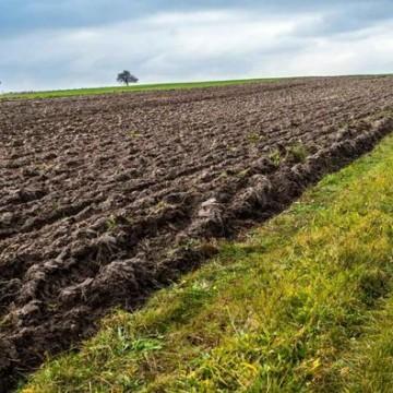 Wezmę w dzierżawę ziemie rolną