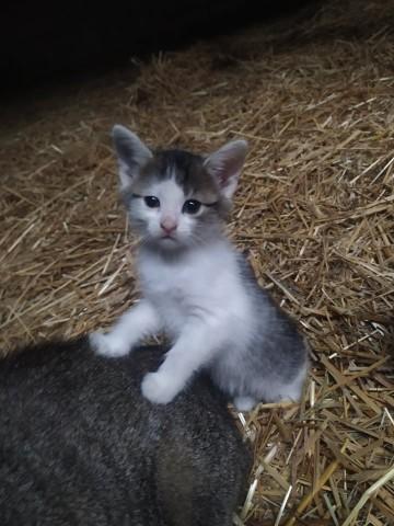 Oddam małą kotkę