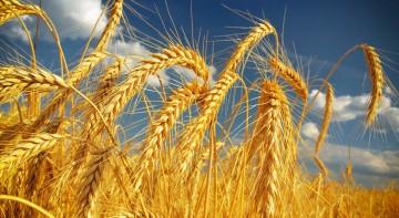 Sprzedaż zbóż