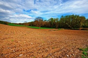 Ślesin - Kupię grunt rolny