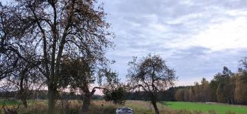 drzewa 4 szt - 200zł całość