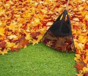 Zbieranie liści, jesienne porządki, pielęgnacja trawnika prz